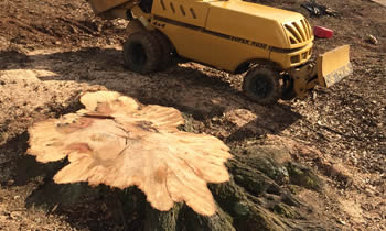 Stump Removal in Buffalo NY Stump Removal Services in Buffalo NY Stump Removal Professionals Buffalo NY Tree Services in Buffalo NY