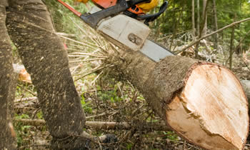 Tree Service in Buffalo NY Tree Service Estimates in Buffalo NY Tree Service Quotes in Buffalo NY Tree Service Professionals in Buffalo NY